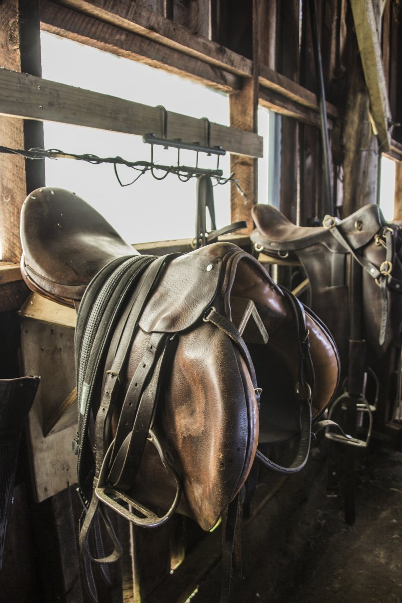 Saddles in the stable - Lansdowne Farm