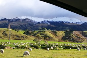 Pastoral Farming - Conway Terraces - Lansdowne Farm