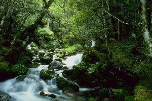 Forest Stream South Island, NZ